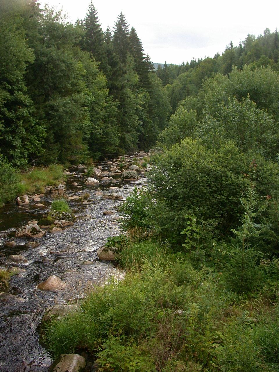 Webcam - Kořenov - Jizera